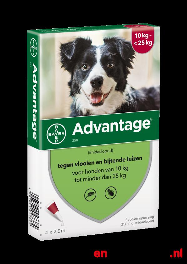 Advantage hond 10 tot 25kg